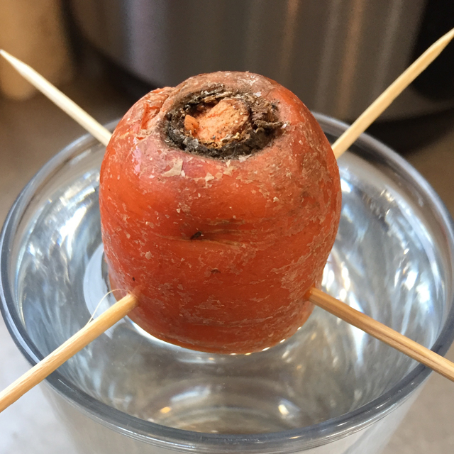 carrot top in a glass of water suspended by toothpicks