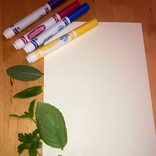 Markers, paper, and fresh herbs on a table.