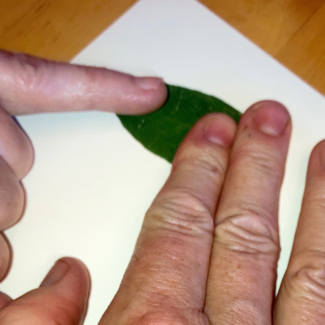 Making a print of an herb leaf on paper.