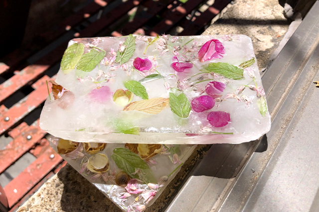 Ice containing flower petals and leaves.