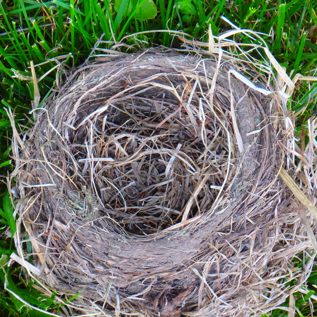 bird's nest made of mud and dried grasses