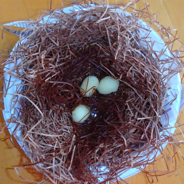 bird's nest craft made at home