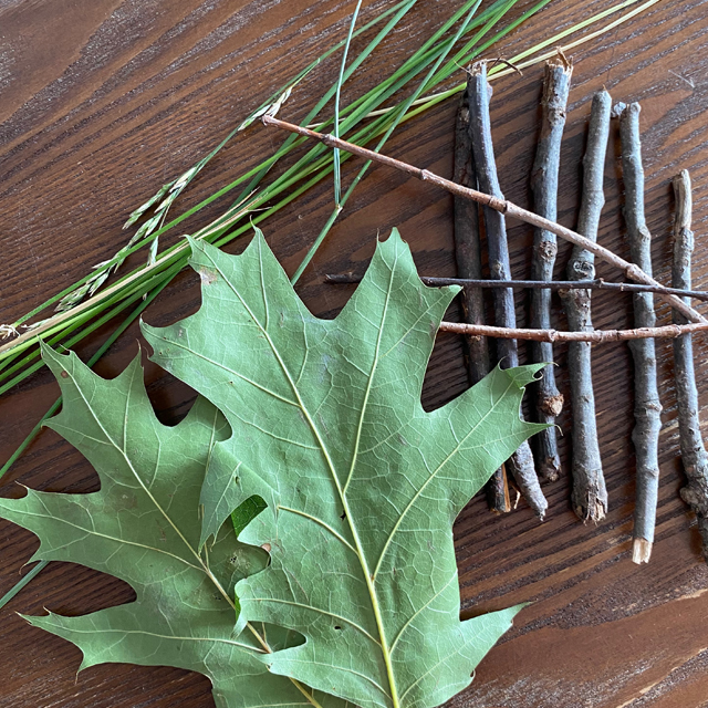Leaves, sticks, and pine needles on a table.