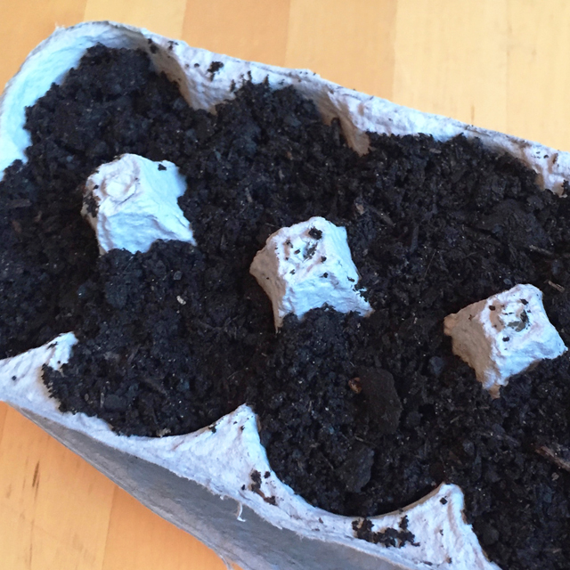 egg carton with soil