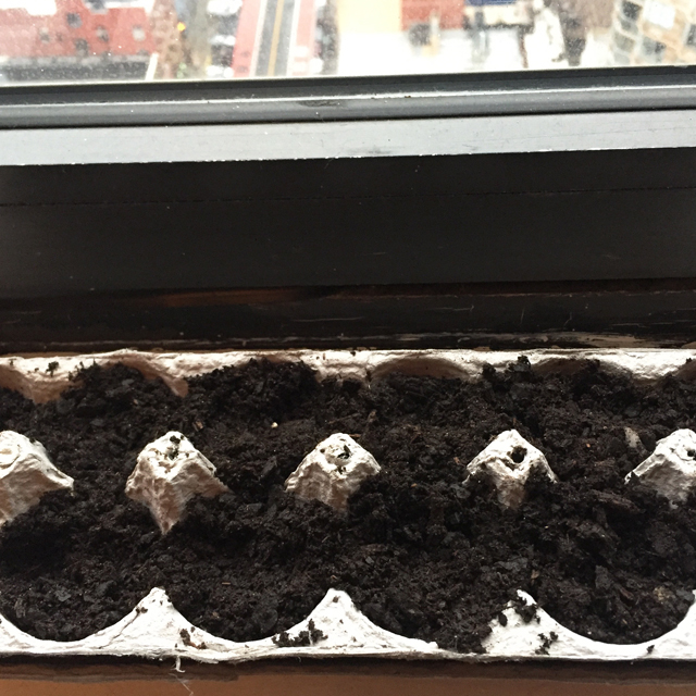 egg carton planted with seeds on a windowsill