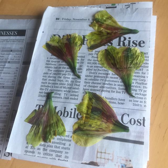 Pressed flowers on top of newspaper.