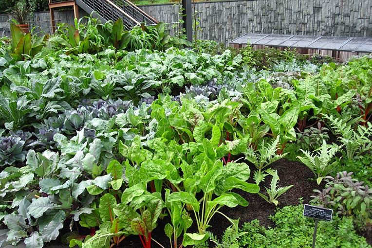 Grow a Culinary Garden
