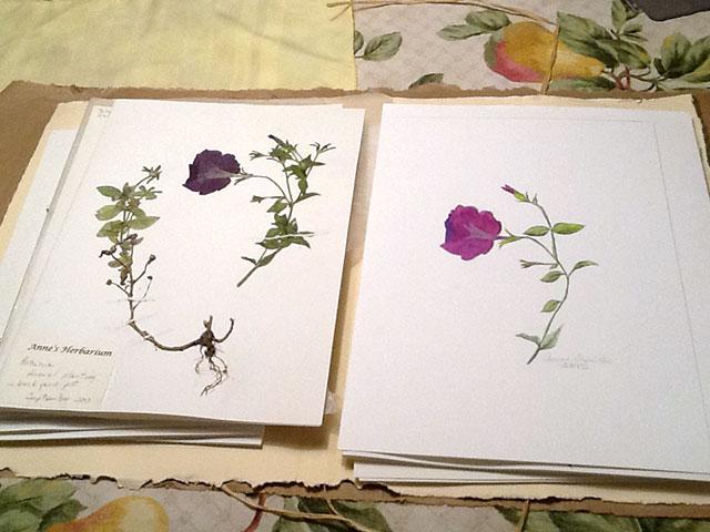 Anne's Herbarium