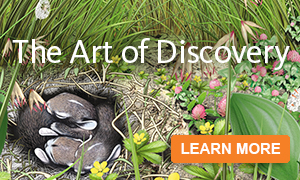 The Art of Discovery
