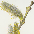 Patience, Paper, Pen, and Brush: Botanical Artwork by Dick Rauh