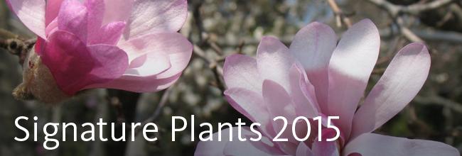 Signature Plants