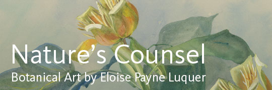Nature's Counsel: Botanical Art by Eloise Payne Luquer