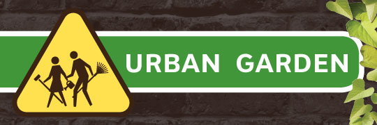 Summer Exhibit: Urban Garden