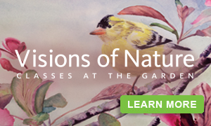 Visions of Nature 2015: Classes at the Garden