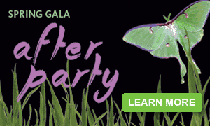 Spring Gala After Party 2015
