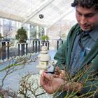 Spring Bonsai Seminar: Creating a Bonsai from Raw Material