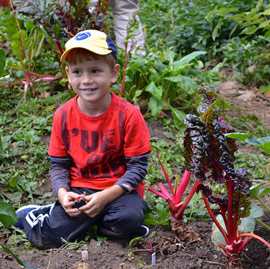 A child sits next to swiss chard in Brooklyn Botanic Garden's Children's Garden.