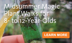 Midsummer Magic Plant Walks for 8‑ to 12‑Year-Olds