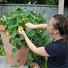 Rooftop Container Gardening