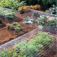 Arched over tasty vegetable crops, wire fencing discourages hungry deer.