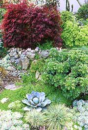 Plants with silvery, waxy, fleshy, or small leaves are usually adapted to dry soils. The agave and succulents in the Border at right require little water.