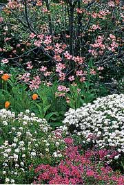 Native plant communities are arranged in layers to create a complex but seamless whole. Imitate nature by integrating shrubs, such as the flowering dogwood, above, into your perennial border
