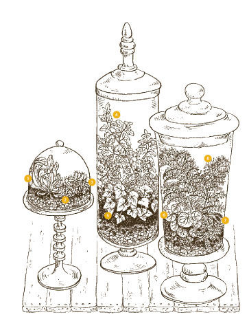 tree terrarium designs
