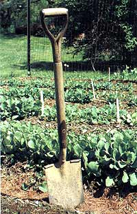 Look for a handle that's not painted, so you see that the wood is knot-free and runs the length of the handle.