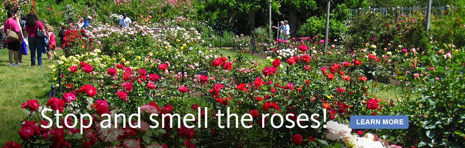 Stop and smell the roses. The Rose Garden is in bloom!