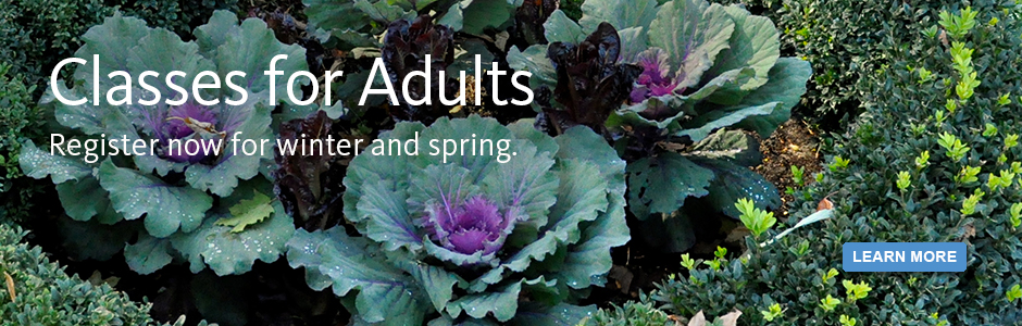 Classes for adults! Register now for winter and spring.
