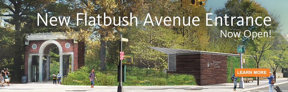 Flatbush Gate Open