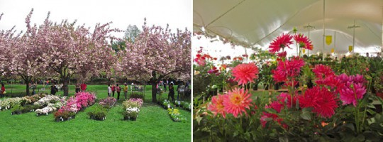 BBG's Annual Plant Sale Offers Over 20,000 Plants on April 30 and May 1