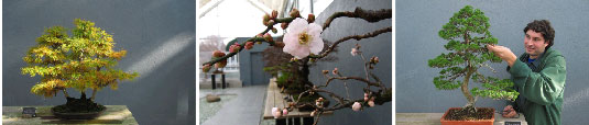 Graceful Perseverance: A Celebration of Bonsai at Brooklyn Botanic Garden