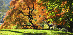 Fall foliage in the Brooklyn Botanic Garden
