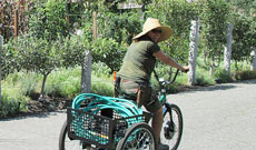 A BBG staff member on a bicycle