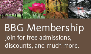 BBG Membership: Join for free admissions, discounts, and much more